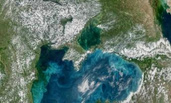 планктон фото черное море