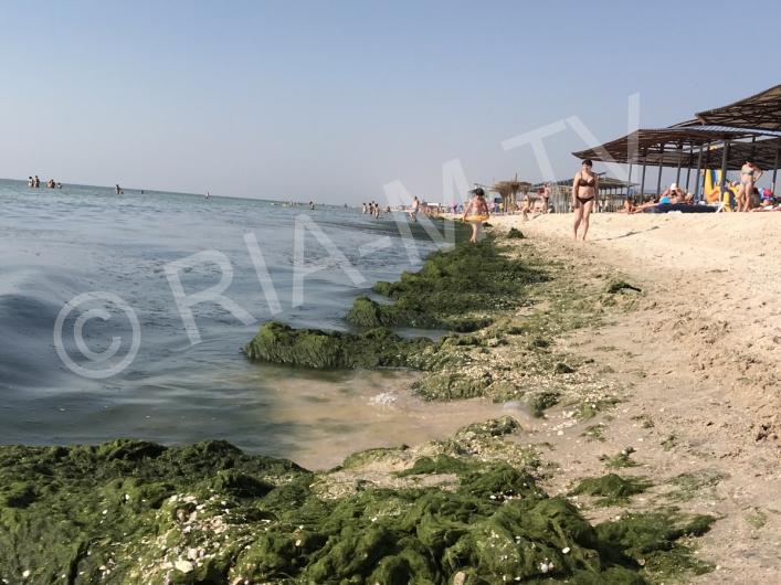Запорожский курорт утопает в гнилых водорослях (фото)