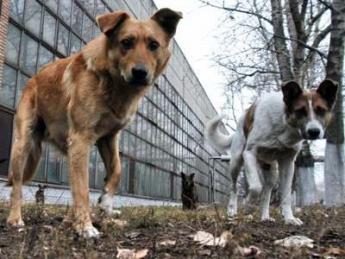 За стерилизацию каждой собаки в Мелитополе харьковская фирма желает  получать 2200 гривен cfde4831cc190