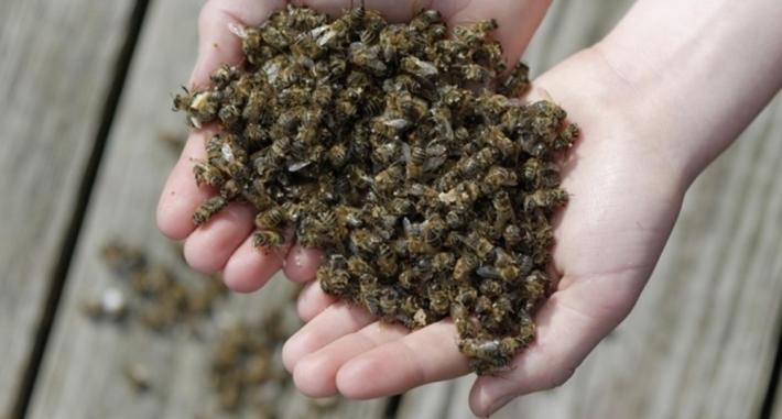 За массовую гибель пчел в Запорожской области так никто и не ответил