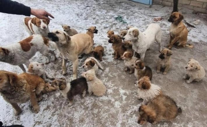 В Мелитополе погибают маленькие щенки (фото)