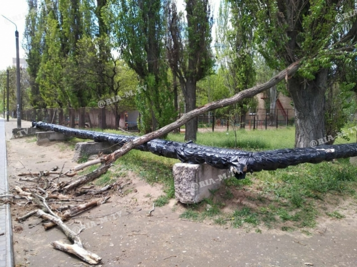 В Мелитополе на пешеходную зону упало дерево (фото)