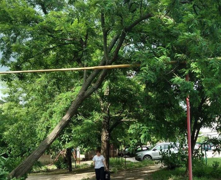 В Мелитополе дерево рухнуло на газовую трубу (фото)