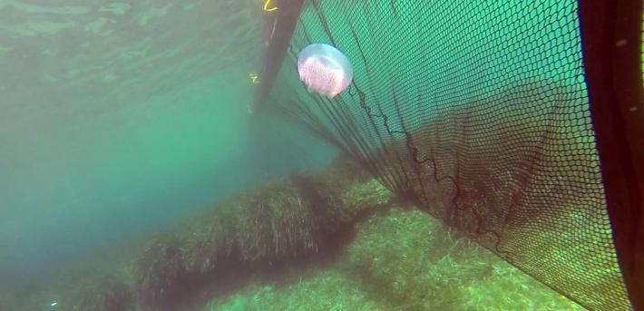В Кирилловке начали устанавливать барьерные сетки от медуз - сколько это стоит (фото)